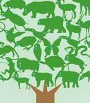 طرح برگزیده مسابقه Love your earth